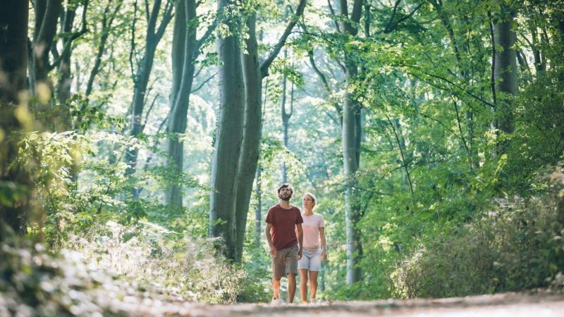 Procházka po lese – perfektní doplnění lázeňského pobytu. Zdroj: © ČNOPK
